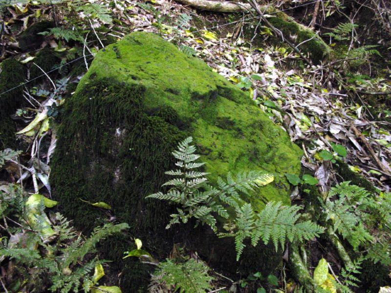 green_rock